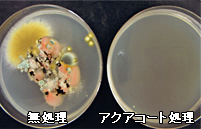 おしぼり雑菌培養後、同定試験